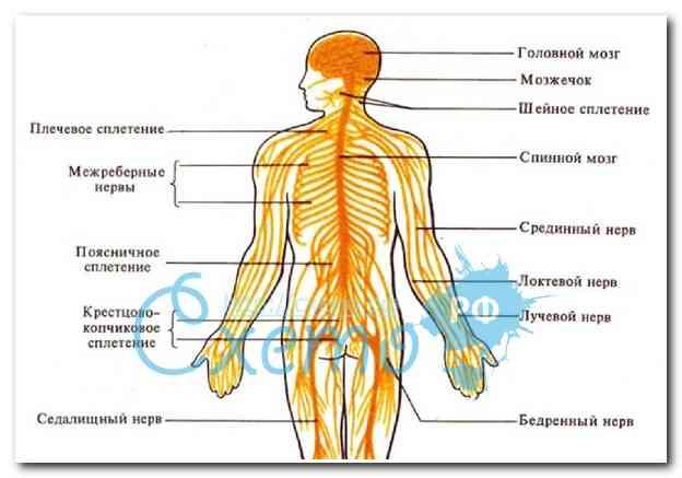 и здоровье нервной системы
