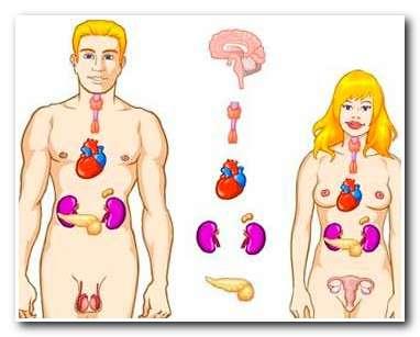 О пользе бани для эндокринной системы