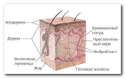 Польза бани для кожи человека