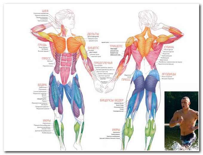 Польза сауны для мышечной системы человека