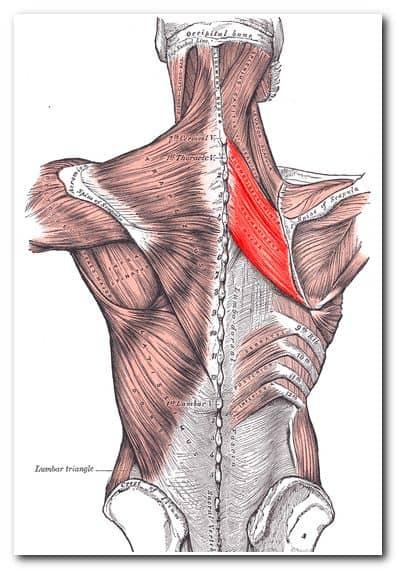 Как правильно делать массаж спины - ромбовидная мышца