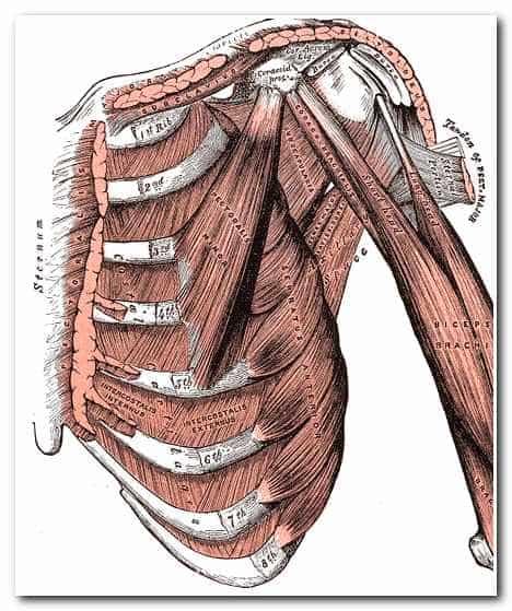 Самомассаж груди - наружные межреберные мышцы