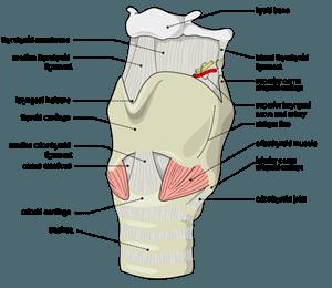 Самомассаж шеи при банных процедурах