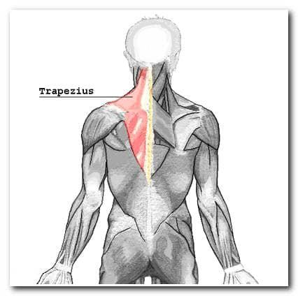 Самомассаж шеи - трапециевидная мышца