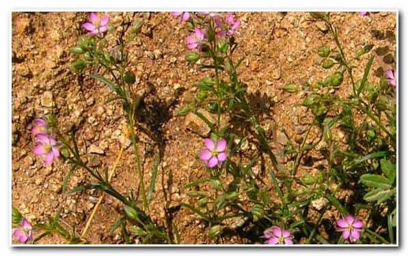 Расчет фундамента для бани – глинистый грунт