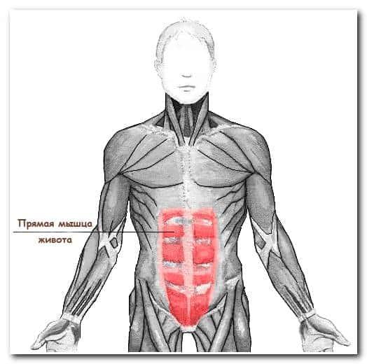 Самомассаж живота в бане – строение прямой мышцы