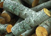 Подойдут ли для бани осиновые дрова?