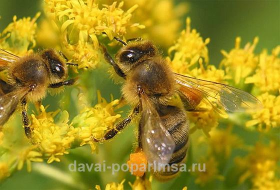Натуральный мед в бане